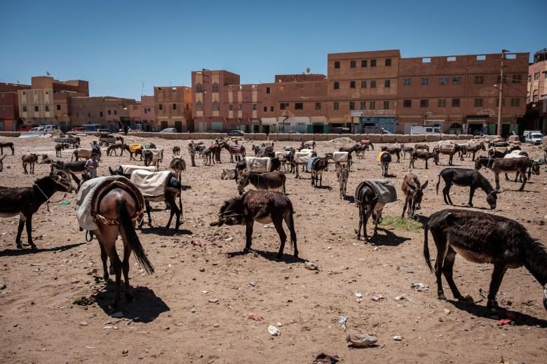 Morocco Rissani 07