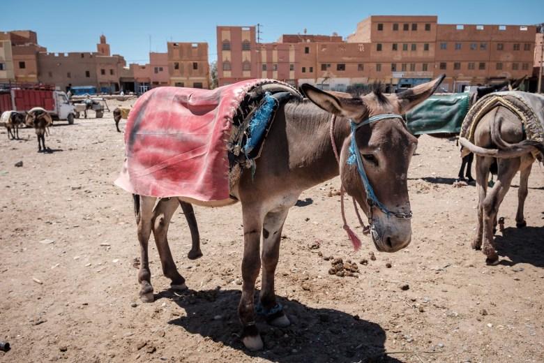 Morocco Rissani 09