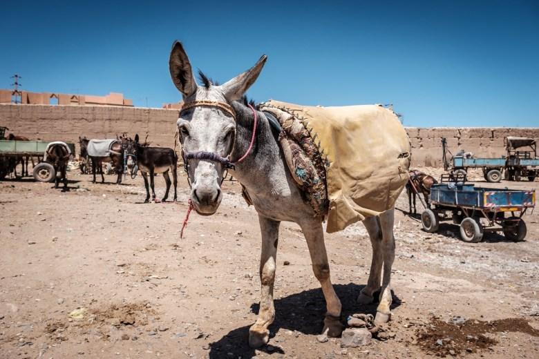 Morocco Rissani 10