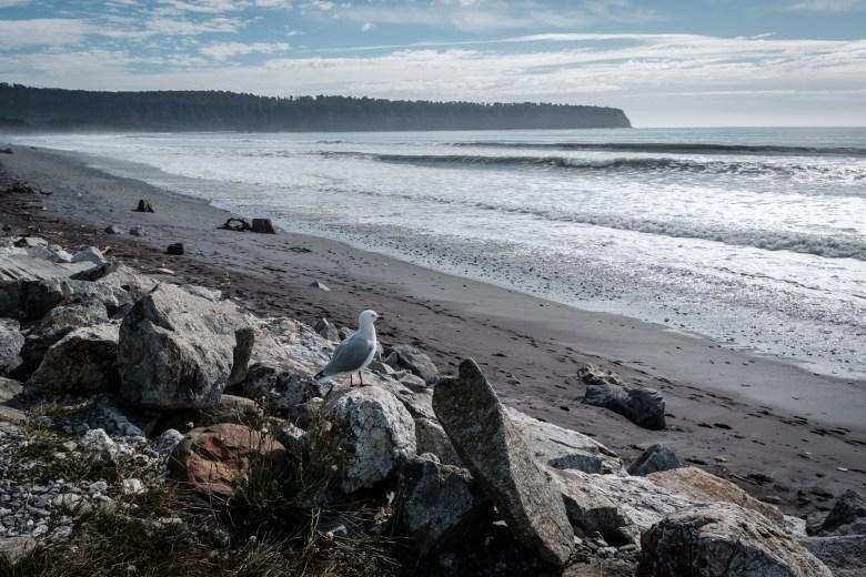 New Zealand Bruce Bay 09
