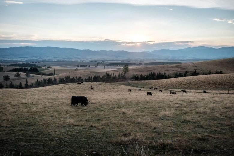 New Zealand Mount Cook 07