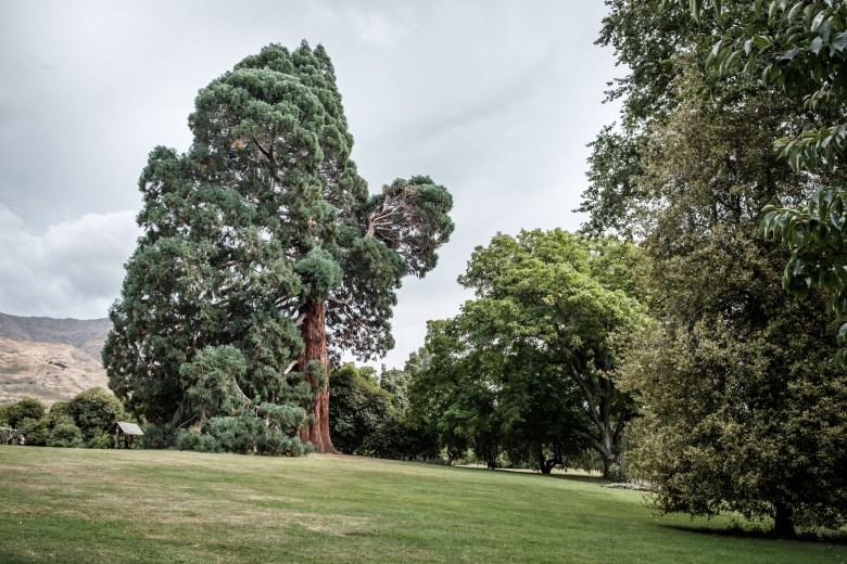 New Zealand Wanaka 5