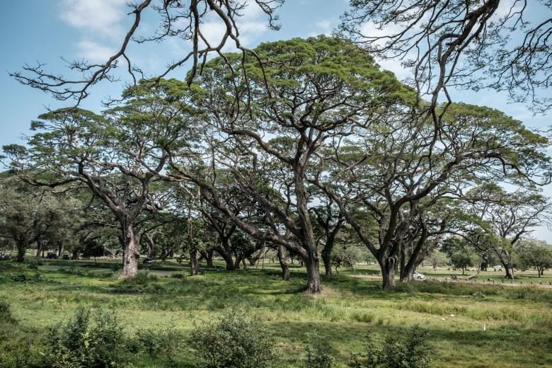 Sri Lanka Anuradhapura 18