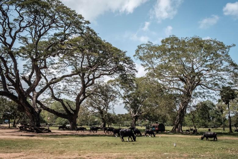 Sri Lanka Anuradhapura 19