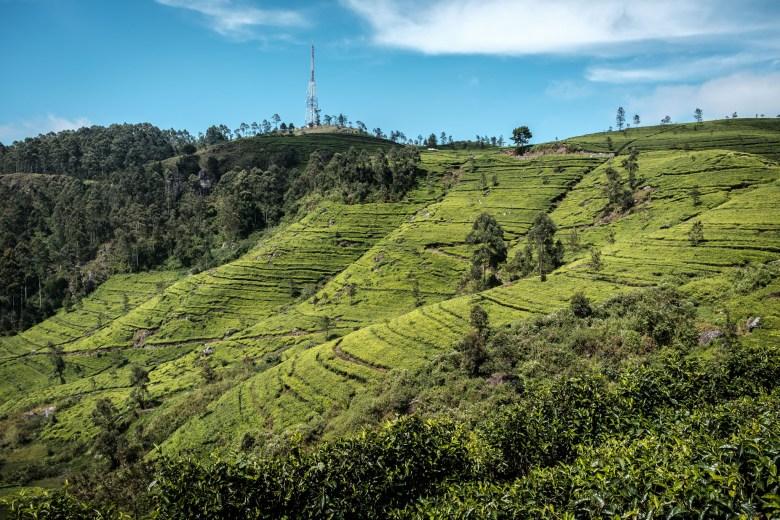 Sri Lanka Ella 51