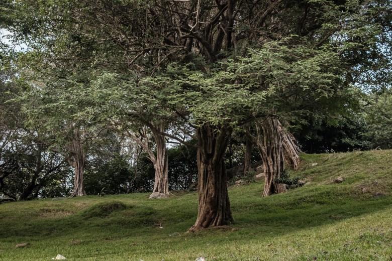Sri Lanka Mihintale 29