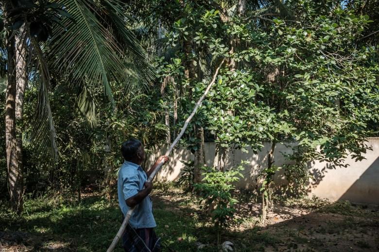 Sri Lanka Mirissa 64