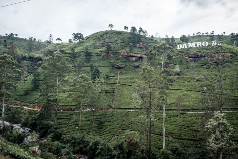 Sri Lanka Nuwara Eliya 55