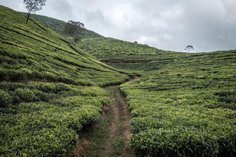 Sri Lanka Nuwara Eliya 74