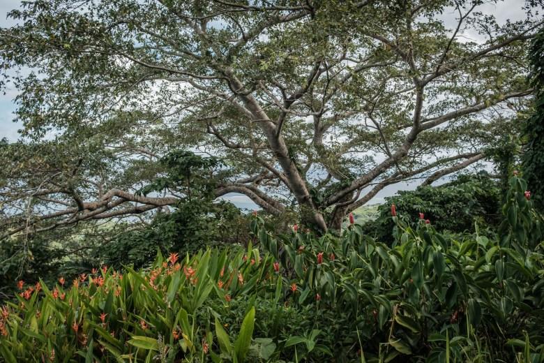 Vanuatu Efate 023