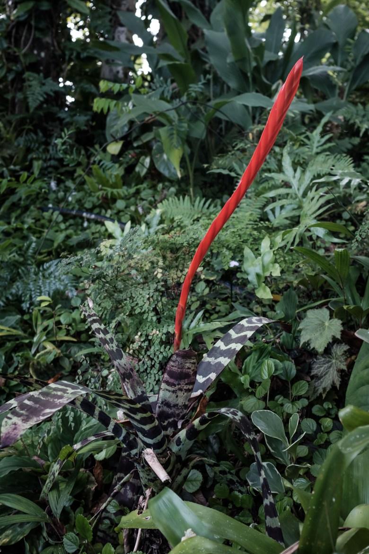 Vanuatu Efate 024