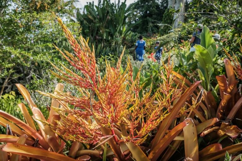Vanuatu Efate 030
