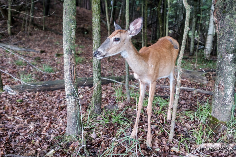 A-Deer
