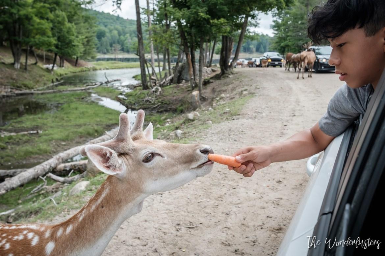 Feeding-the-animals