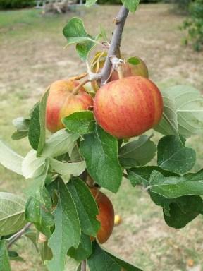delicious inexpensive organic food
