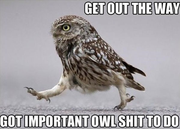 funny captioned pictures of birds