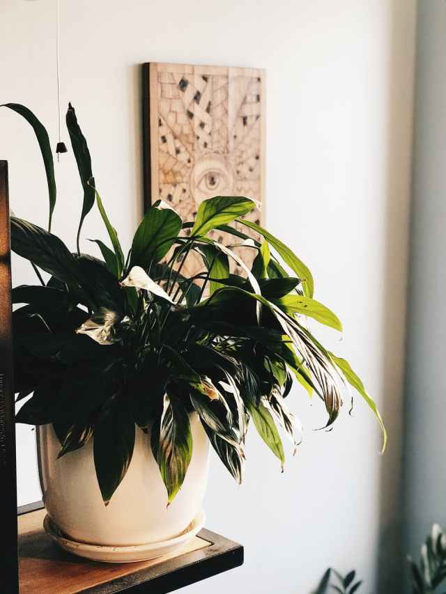 7 of the Best Bedroom Plants