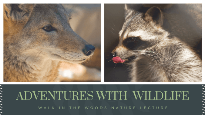 copy-of-adventures-in-urban-wildlife.png