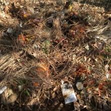 Compost Bin with Kitchen Scraps