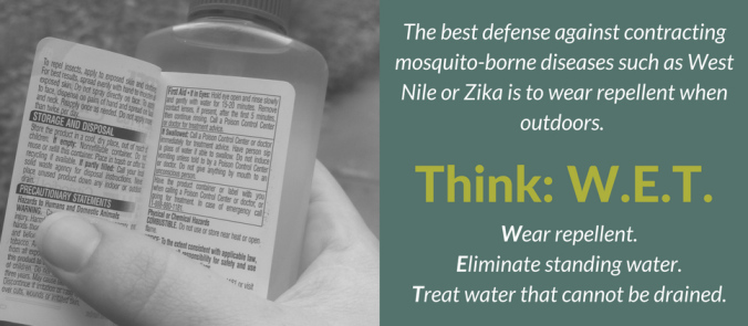 think-wet-mosquito-blog