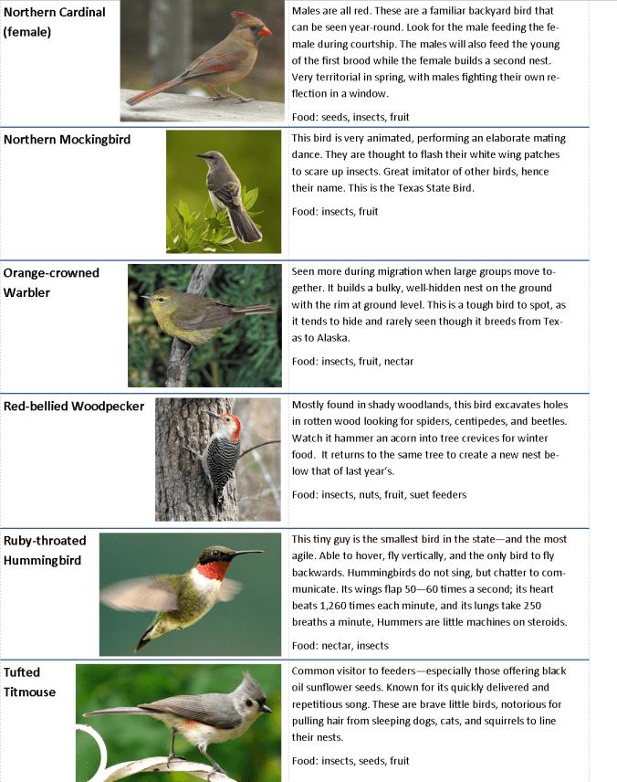 Backyard Bird chart.page 3
