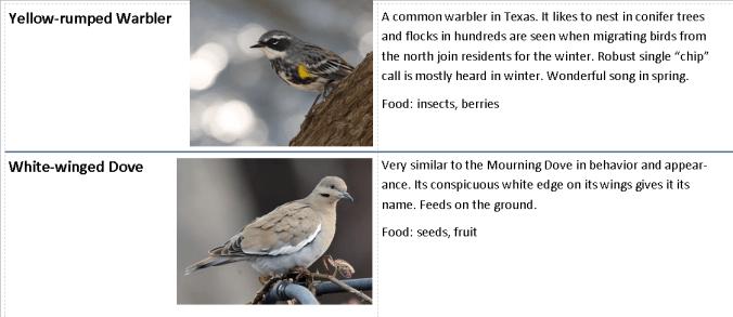 Backyard Bird chart.page 4