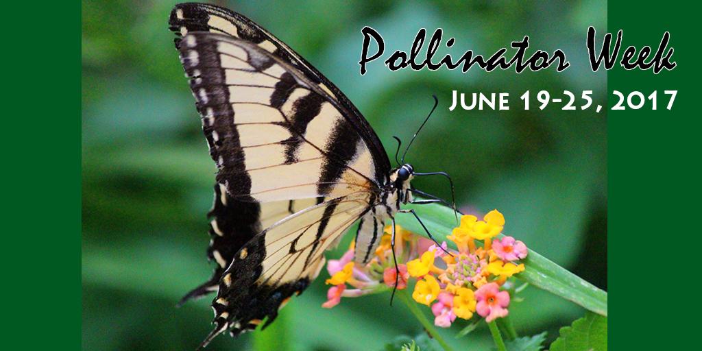 pollinator lmv