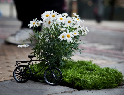 mini bike and daisies close-up