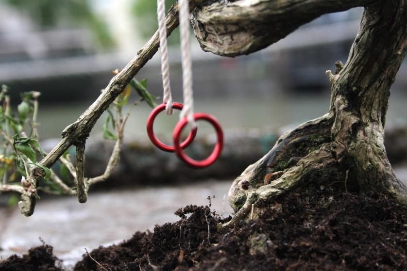 tiny gym rings on a tree stump