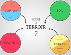 terroir image