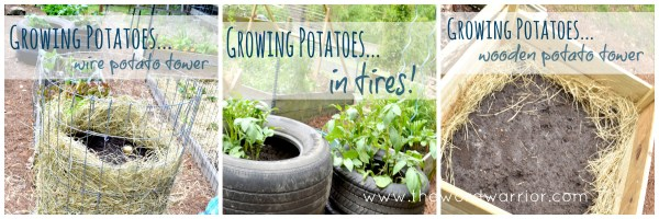 Blog - WW-Farm Life-3pic-potatoes