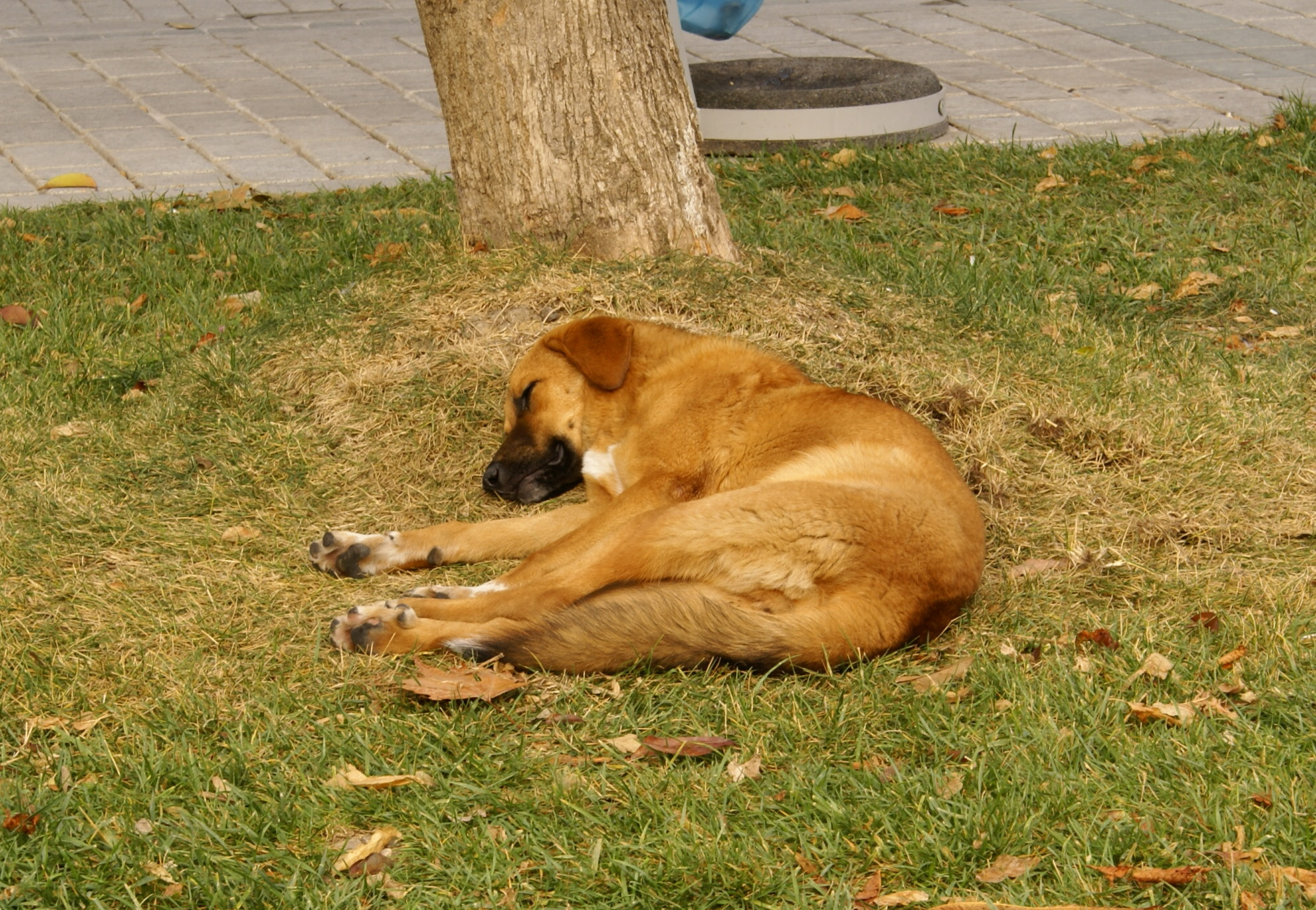 A common sight on the streets of Istanbul: a stray dog