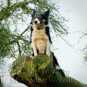 Kay - perched on top of a fallen tree trunk