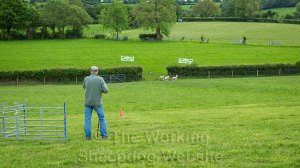 The handler stands at the post while his dog brings the sheep into the field at a sheepdog trial