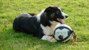 Carew lying down next to a large black and white ball