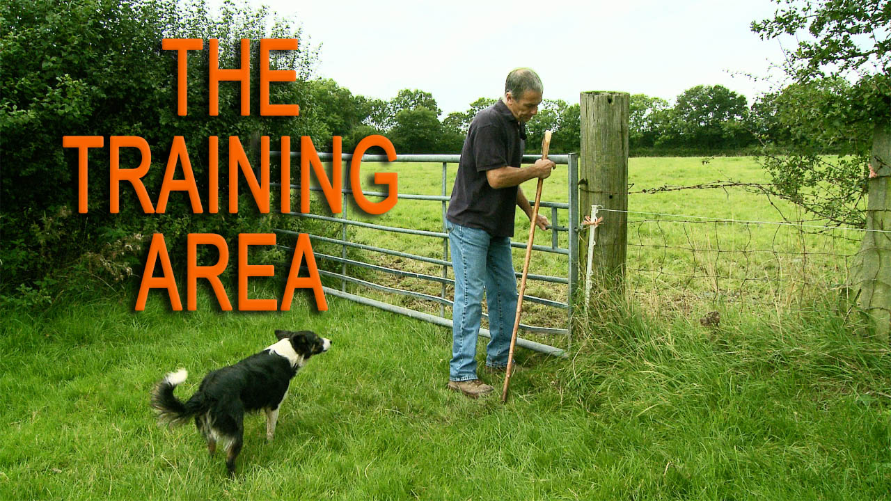 Photo of a sheepdog trainer fastening the field gate, watched by Kay the trainee sheepdog. This is the title image of the training area tutorial