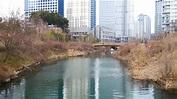 suwon stream