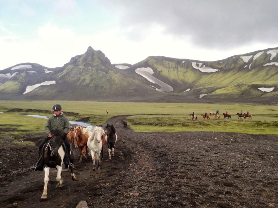 Laugavegur Trail - horses farm