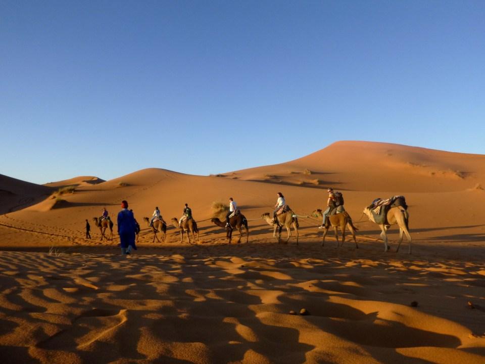Camel Trekk