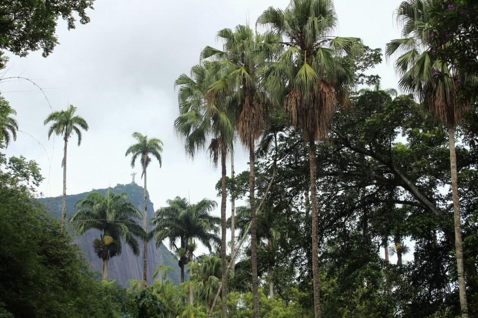 Botanic Garden RJ
