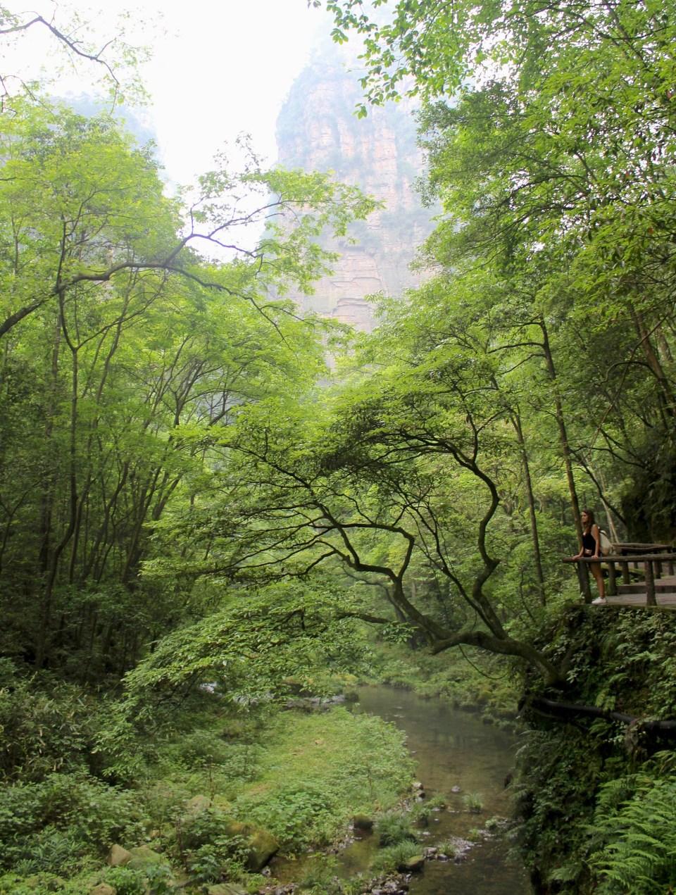 Zhangjiajie Forest 1