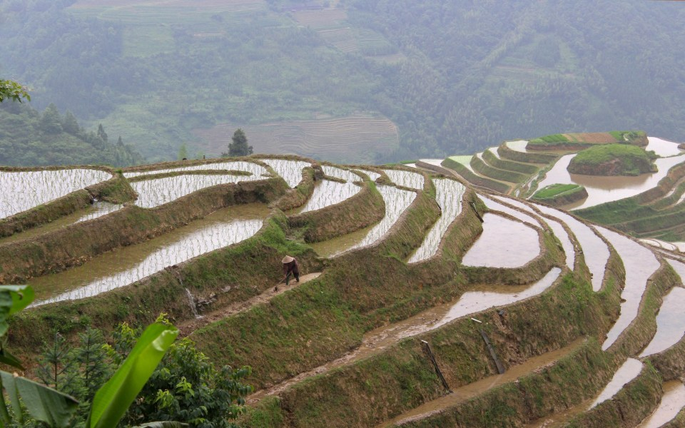 longji-rice-terrace-11