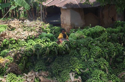 Woman selling Bananas Africa