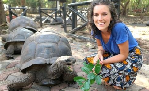 Aldabra Turtles - Prison Island - Zanzibar