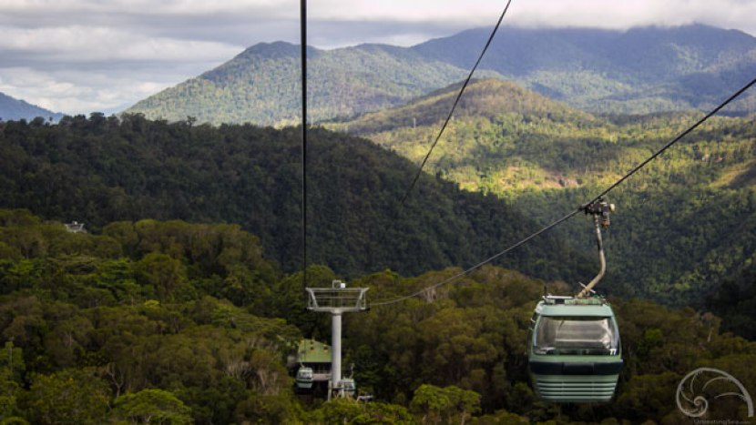 Descending back to Cairns on the skyrail. Wouldja look at that view!