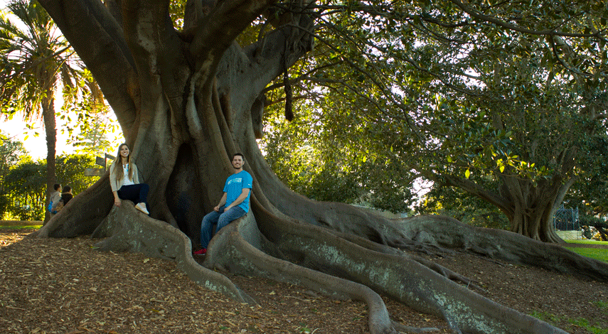 Sydney Botanic Garden