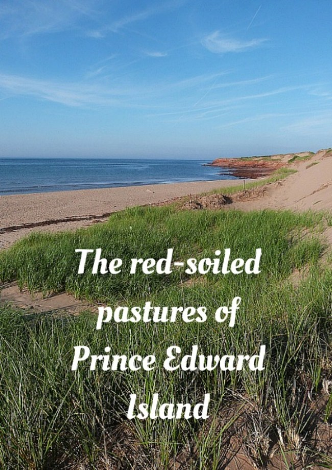 The red-soiled pastures of Prince Edward Island