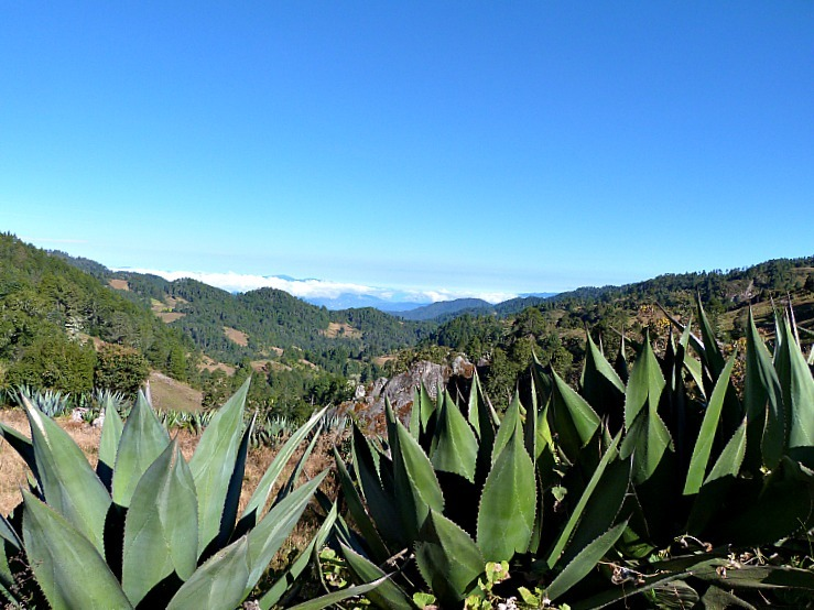 Hiking between Indigenous villages in Mexico's Sierra Norte