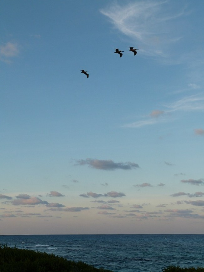 Birds at sunset on Isla Mujeres, Mexico