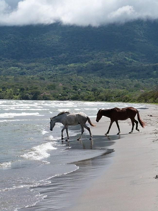 Horses at Santo Domingo beach on Ometepe Island, Nicaragua